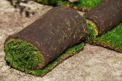 Grama verde do gramado nos rolos imagem de stock