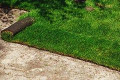Grama verde do gramado nos rolos fotos de stock
