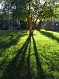 Grama verde durante outubro foto de stock royalty free