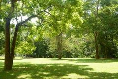Grama verde e árvore Fotos de Stock Royalty Free