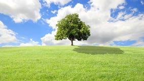 Grama verde e árvore, fundo das nuvens.