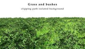 Grama verde e arbustos isolados Fotos de Stock Royalty Free