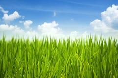 Grama verde e céu Imagens de Stock Royalty Free
