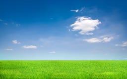 Grama verde e céu azul fotografia de stock