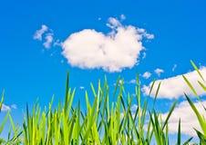 Grama verde e céu azul Foto de Stock Royalty Free