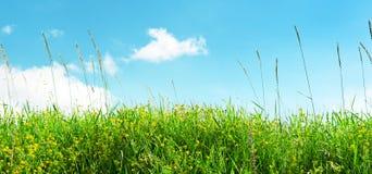 grama verde e céu azul Fotos de Stock