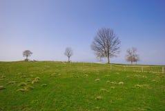 Grama verde e céu azul da árvore imagem de stock
