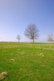Grama verde e céu azul da árvore imagem de stock royalty free
