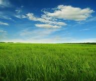 Grama verde e céu azul Fotografia de Stock Royalty Free