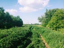 Grama verde e estrada Foto de Stock Royalty Free