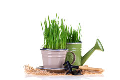 Grama verde e ferramentas de jardim Fotos de Stock
