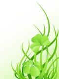 Grama verde e folhas do trevo Imagens de Stock Royalty Free