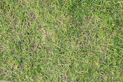 Grama verde e grama seca Imagem de Stock Royalty Free