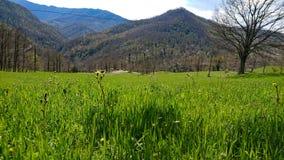 Grama verde e montanhas imagens de stock