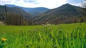 Grama verde e montanhas foto de stock royalty free
