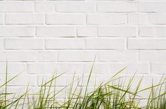 Grama verde e parede de tijolo Foto de Stock Royalty Free