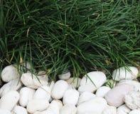 Grama verde e pedra Foto de Stock