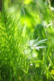 Grama verde e plantas Fotografia de Stock Royalty Free