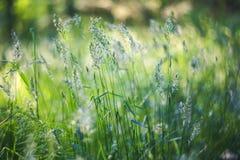 Grama verde e plantas frescas na luz solar com fundo borrado e bokeh bonito Imagem macro com profundidade de campo pequena fotos de stock