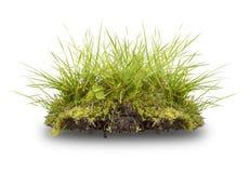 Grama verde e raiz isoladas no branco Foto de Stock