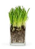 Grama verde e raizes Fotos de Stock