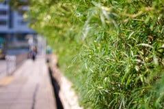 Grama verde e telhas concretas Fotografia de Stock Royalty Free