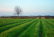 Grama verde e uma árvore imagens de stock