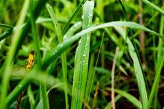 Grama verde em gotas de orvalho Fotos de Stock