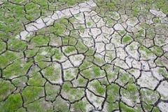 Grama verde em terra rachada Imagens de Stock Royalty Free