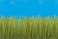 Grama verde. Imagens de Stock