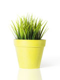 Grama verde em um potenciômetro de flor amarelo isolado no fundo branco foto de stock