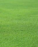 Grama verde fina Fotos de Stock Royalty Free