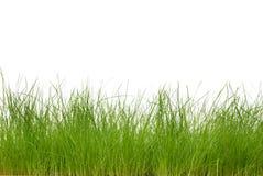 Grama verde fresca Fotografia de Stock
