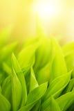 Grama verde fresca Fotos de Stock Royalty Free