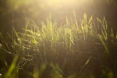 Grama verde fresca imagens de stock royalty free