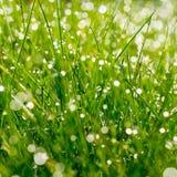 A grama verde fresca com água deixa cair no fundo da luz solar Fotos de Stock Royalty Free