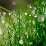 A grama verde fresca com água deixa cair no fundo da luz solar Fotos de Stock
