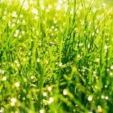 A grama verde fresca com água deixa cair no fundo da luz solar Fotografia de Stock Royalty Free