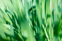 Grama verde fresca com gota de água na luz do sol Foto de Stock