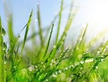 Grama verde fresca com gotas da água Imagem de Stock Royalty Free