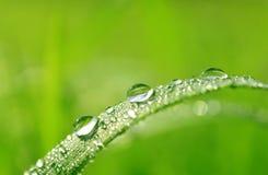 Grama verde fresca com gotas da água Imagem de Stock