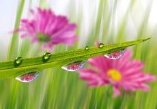Grama verde fresca com o close up das gotas de orvalho Fotos de Stock
