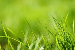Grama verde fresca da mola Foto de Stock