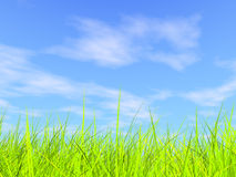 Grama verde fresca no fundo ensolarado azul do céu Imagens de Stock Royalty Free