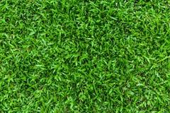 Grama verde, fundo Imagem de Stock