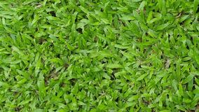 Grama verde Fundo Fotografia de Stock