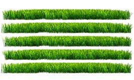 Grama verde, fundo transparente do png Fotos de Stock