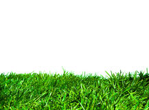 Grama verde isolada Imagens de Stock Royalty Free