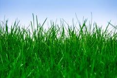 Grama verde isolada Fotos de Stock Royalty Free