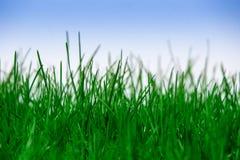 Grama verde isolada Fotografia de Stock Royalty Free